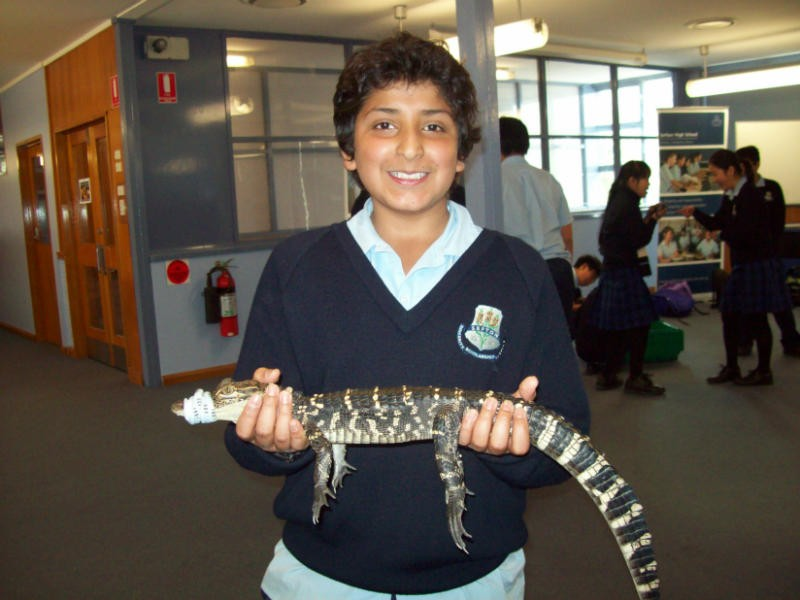 A student holding a baby crocodile